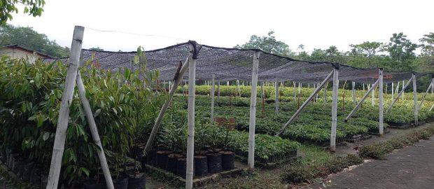 Komunitas Green Nusantara: Menanam untuk Air dan Ketahanan Pangan