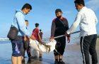 Rayakan Harlah NU ke 95, IPNU/IPPNU Badung dan Denpasar Bersih-bersih Pantai