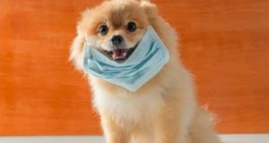 Akhlak dan Kasih Sayang Nabi Kepada Anjing