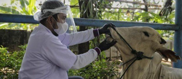 Bahtsul Masail: Masa Pandemi, Lebih Utama Berkurban Atau Berdonasi?